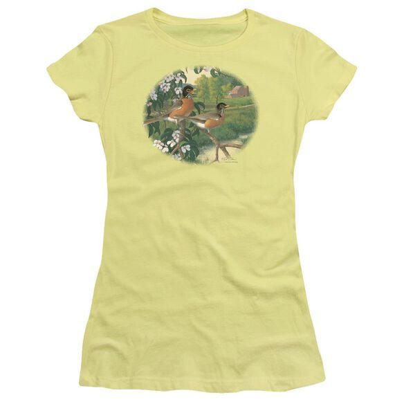 Wildlife Apple Blossom Time Robins Short Sleeve Junior Sheer T-Shirt