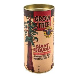 Giant Sequoia Grow-A-Tree Kit