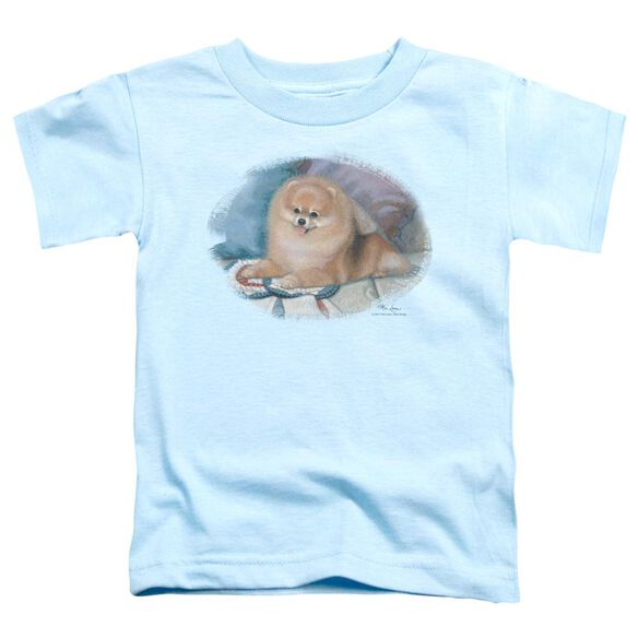 Wildlife Pomeranian Portrait Short Sleeve Toddler Tee Light Blue T-Shirt
