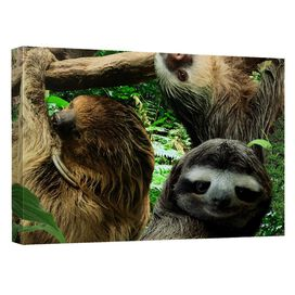 Sloth Club Quickpro Artwrap Back Board