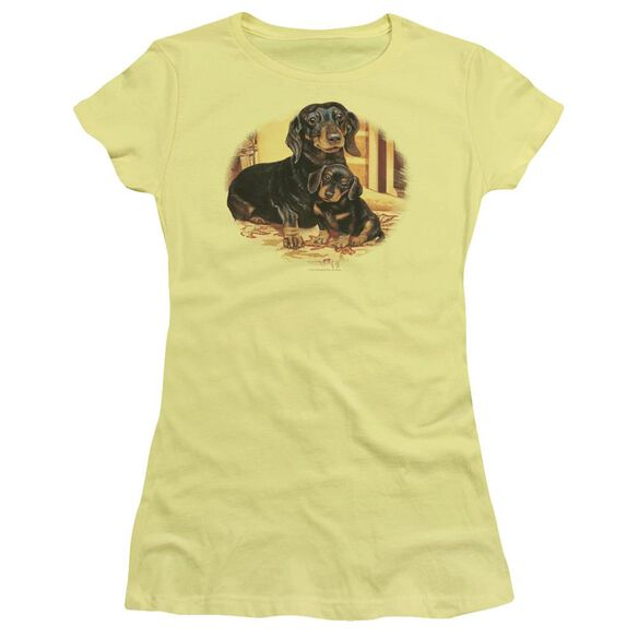 Wildlife Picture Perfect Dachshunds Short Sleeve Junior Sheer T-Shirt
