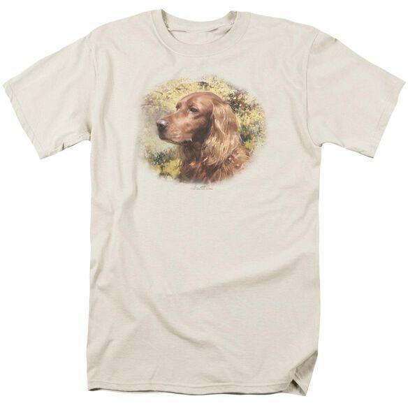 WILDLIFE IRISH SETTER HEAD - S/S ADULT 18/1 - CREAM T-Shirt