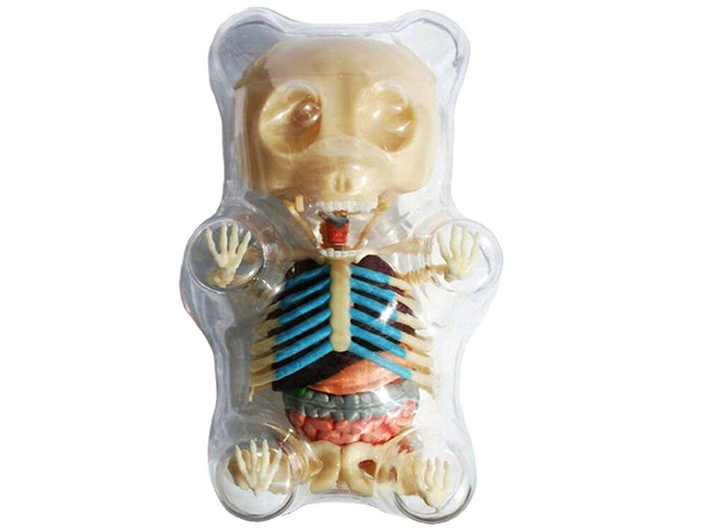 4D Master Gummi Bear Skeleton Anatomy Model Kit | FYE